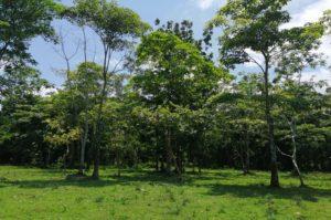 Despojo y deforestación Pedeguita