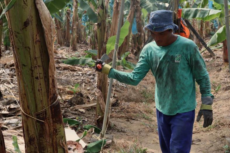 Plantaciones de Banano