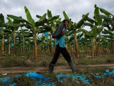 Cultivos de platano en la zona de Caño Manso / Contagio Radio - Gabriel Galindo